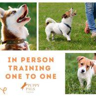 Puppy Pals, Ulverston