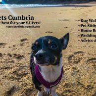 V.I.Pets Cumbria, Ulverston